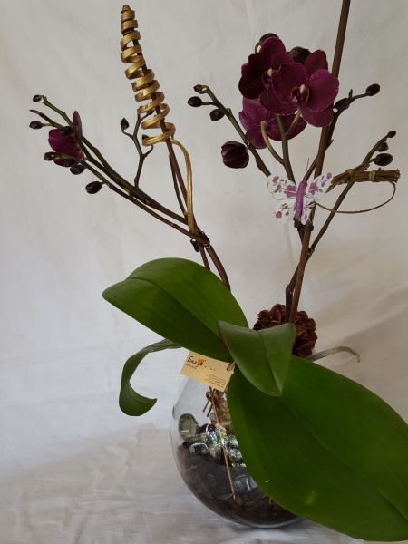 Orchid in a glass container and butterfly